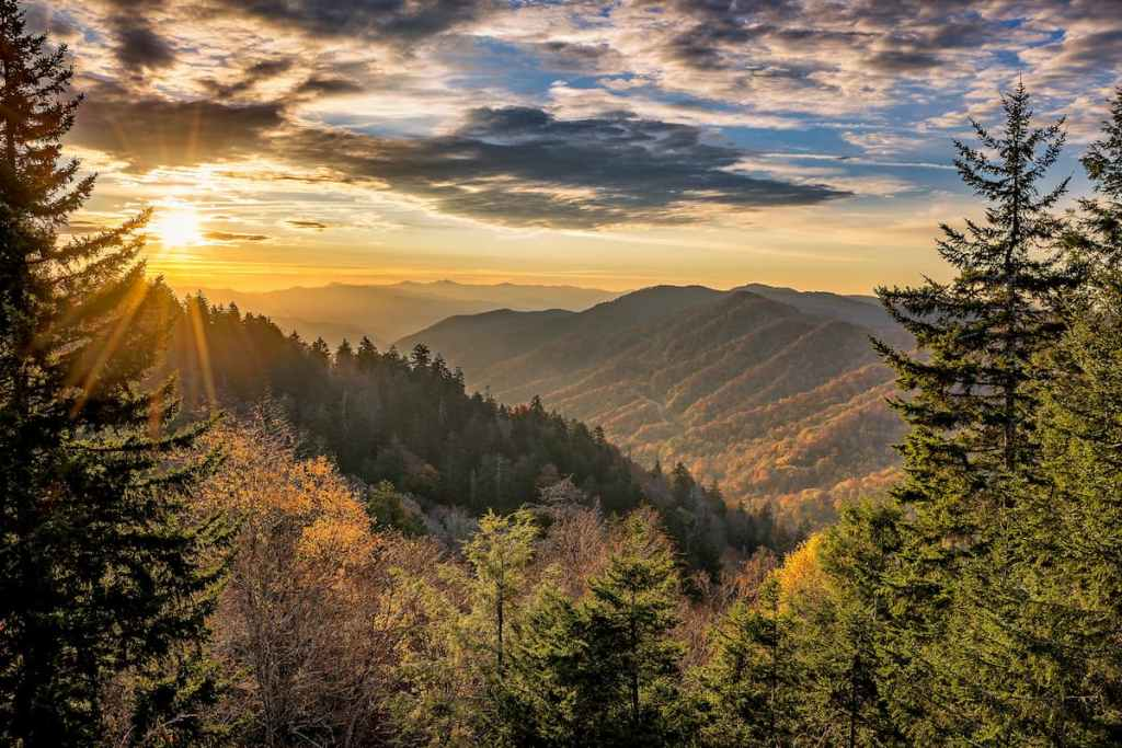 Forest in Smoky Mountains